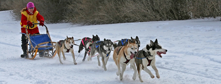 Cannington Dog Sled Races