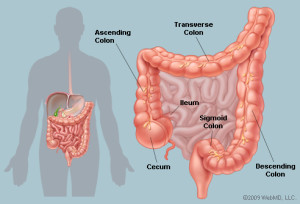 Colon image from WebMD