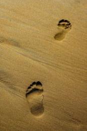 footsteps_2608305