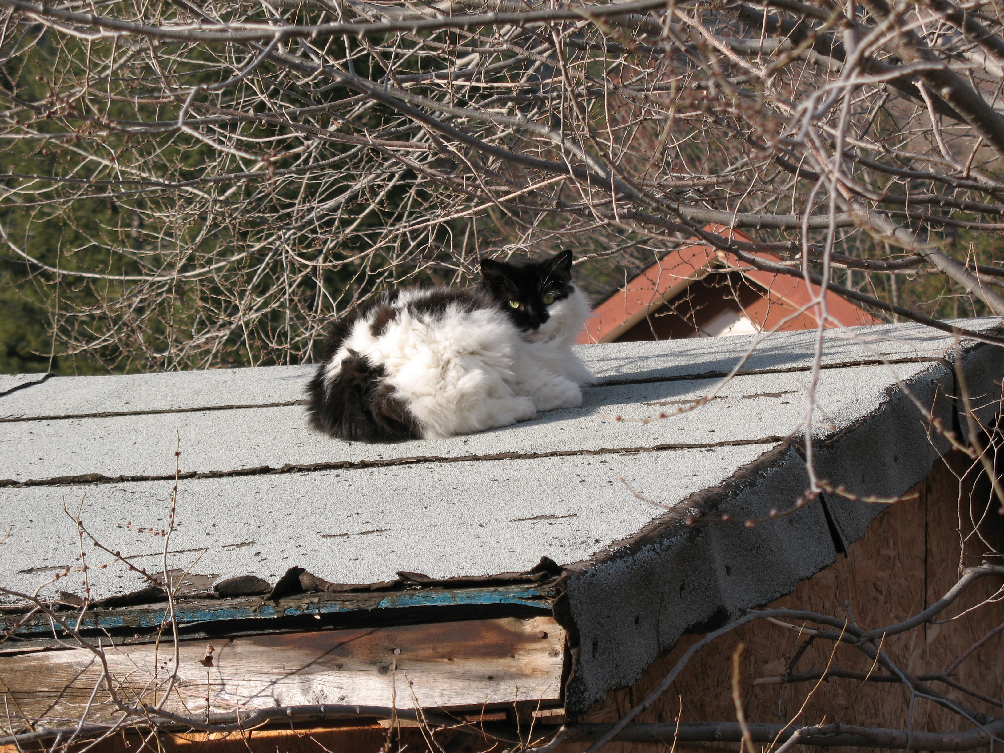 Cat On a Warm Roof